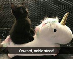 Giddyup horsee