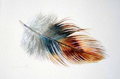 Feather 147 - Phoenix Rooster Feather- Original Watercolour - Nightly Study April 20th.