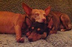 Binky & Evy in dromenland...