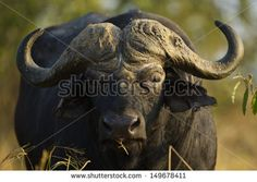 Wild Animals Stock Photos, Images, & Pictures | Shutterstock