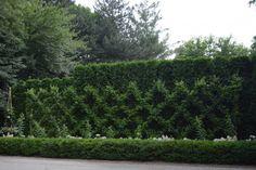 belgian-fence - on driveway courtyard fence l Deborah Silver