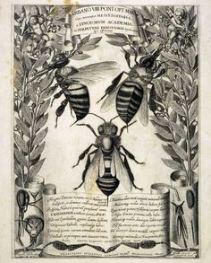 Francesco Stelluti (1625). An engraving from Melissographia, which was presented to Pope Urban VII. Bees were the heraldic emblem of the Barberini family to which Pope Urban VIII belonged. This engraving was gifted to him.