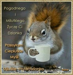 I Love Coffee, How To Know, Motto, Squirrel, Good Morning, Haha, Funny, Memes, Pictures