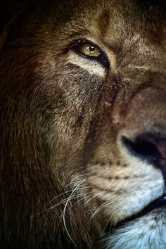 'The King' in 30 Fantastic Examples of Lion Photography