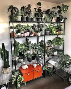 It is inevitable that insects or another infestation will make its way to your plants at one point or another. If you are dealing with pests in your indoor Room With Plants, House Plants Decor, Plant Decor, Indoor Greenhouse, Plant Shelves, Garden Shelves, Plant Aesthetic, Balcony Garden, Garden Plants