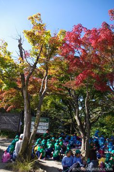 Beautiful autumn colors on Mt. Takao near Tokyo (October 2014).