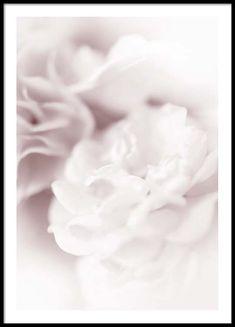 Dusty pearl Affiche dans le groupe Affiches / Formats / 50x70cm chez Desenio AB (2640)