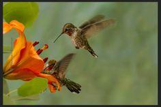 Unique Hummingbird Pictures