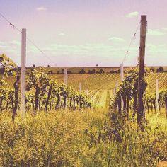 Vineyards Germany