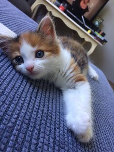 Exceptional cute cats detail are available on our website. Cute Baby Cats, Cute Cats And Kittens, Cute Baby Animals, Kittens Cutest, Animals And Pets, Pretty Cats, Beautiful Cats, Animals Beautiful, Puppies And Kitties