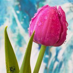 Drippy Tulip by FauxHead.deviantart.com on @deviantART