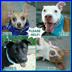 4 LIVES TOO MANY AT RISK TO BE PUT DOWN TOMARROW TUESDAY 10-4-16