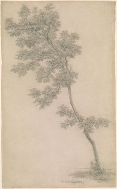 vjeranski | Caspar David Friedrich 1774-1840 Tree, 1803 Pencil...