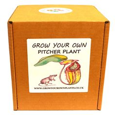 Grow Your Own Carnivorous Pitcher Plant - Premium Plant Kit - Unusual Birthday or Christmas Gardening / Gardeners Gift Carnivorous Pitcher Plant, Planting, Gardening, Garden Gifts, Grow Your Own, Fathers Day, Kit, Children, Birthday