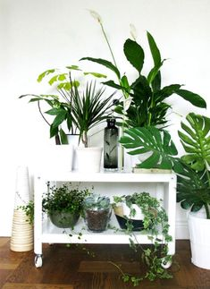 Cozy Little House: Incorporating House Plants Into Your Decor