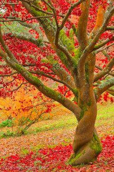 .wow...beautiful colors