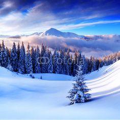 heaps of huge murals Wall Mural trees - frost - winter - snow • PIXERSIZE.com