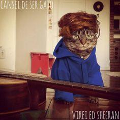 Cansei de ser gato, virei Ed Sheeran - 5 bichinhos de estimação que conquistaram nosso coração