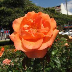 A pop of orange #NewZealand