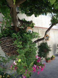 Sotto l'albero di limoni!