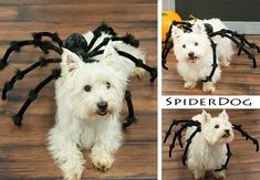 How to Make Your Own Spider Dog Costume - Halloween Costume Ideas Cute Dog Costumes, Dog Halloween Costumes, Halloween Diy, Costume Ideas, Dog Spider Costume, Spider Dog, Giant Spider, Stranger Things Halloween, Halloween Spider Decorations