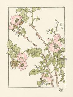 The Briar Rose.jpg