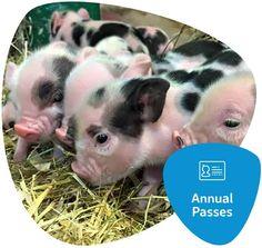 Buy Online - Finkley Down Farm - Family Farm Park, Andover Hampshire