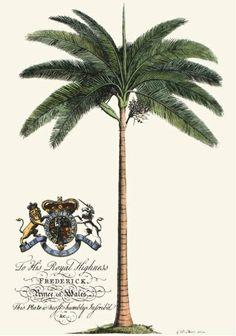 The Natural History of Barbados I