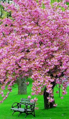 I wish I could sit under these wonderful trees!