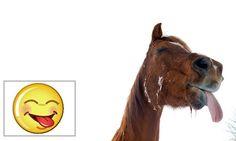 Um cavalo foi flagrado em uma pose curiosa nesta terça-feira (12) em Wilkenburg, perto de Hanover, na Alemanha. A imagem mostra o animal mostrando a língua ao ser fotografado por Julian Stratenschulte (Foto: Julian Stratenschulte/AFP)