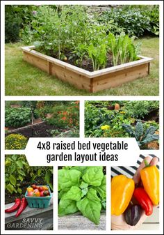 Looking to maximize your harvest from a raised bed garden? These raised bed garden layout plans show you how much you can plant per bed and how to use succession planting to grow multiple crops each year. Raised Bed Garden Layout, Raised Garden Beds, Raised Beds, Small Garden Layout, Small Vegetable Garden Layout Ideas, Raised Bed Planting, Backyard Layout, Garden Benches, Raised Vegetable Gardens