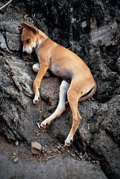 View Perro durmiendo Sleeping dog by Gabriel Orozco on artnet. Browse upcoming and past auction lots by Gabriel Orozco. Baby Dogs, Dogs And Puppies, Doggies, Jeff Wall, Street Dogs, New York Museums, Mexican Artists, Sleeping Dogs, Pics Art
