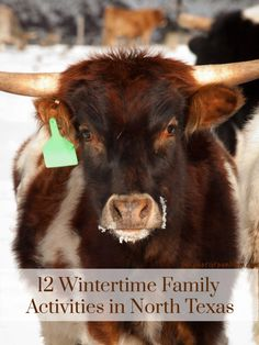 Get your boots on and your cameras ready and come have a good ole time with these 12 Wintertime Family Activities in North Texas. Time Activities, Holiday Activities, Family Activities, Best Places To Vacation, Vacation Ideas, Vacation Packing, Texas Winter, Happy Christmas Day, Dallas Fort Worth Texas
