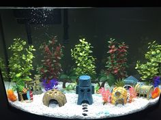 SpongeBob aquarium. Our version of bikini bottom!