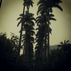 Rio de janeiro. Jardim botanico.