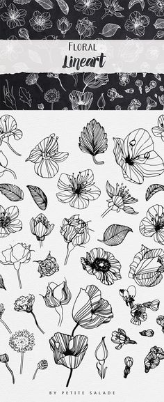 Over 50 Hand-drawn floral elements in PNG/EPS format