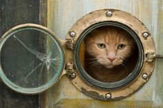 """This ultra creative cat door has a vintage look which will make your visitors say """"wow."""" The creator constructed this clever cat """"portal"""" from a mini porthole window and nautical equipment,. With a few unique supplies and some handiwork, she was able to create an orginal cat door that you just don't see every day. If you're inspired to make your own, you can create your own DIY porthole cat door by using one of these porthole windows."""