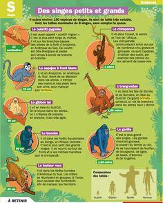 Des singes petits et grands - Mon Quotidien, le seul journal d'actualité pour les enfants de 10-14 ans