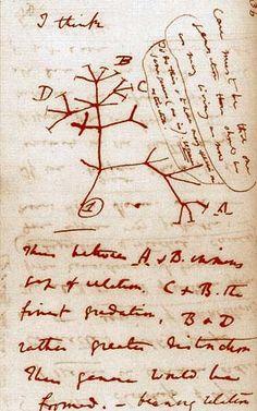 Darwin Tree of Life.