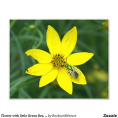 Flower with little Green Bee, Photo Enlargement.