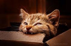 I'm a dangers tiger! by Dalia Fichmann