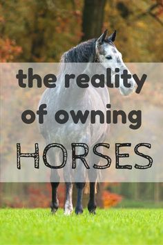 The reality of owning horses... as told through the eyes of a jaded horse owner.
