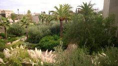 Luscious view from the Four Seasons Marrakech.