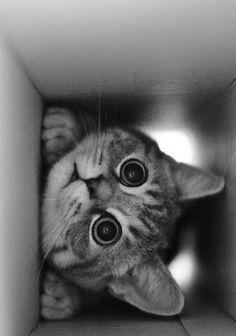 Meowwwwwwwwwwww <3
