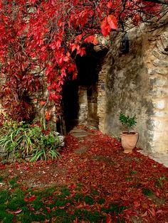 Lost in Arles: Red Leaves