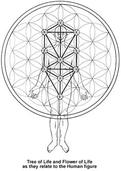 Sacred geometry and the human body --> Great tools for light-workers.. Flower of Life T-Shirts, V-necks, Sweaters, Hoodies & More ONLY 13$ EACH! LIMITED TIME CLICK ON THE PICTURE