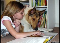 Roo The Reading Dog  Roo the Reading Education Assistance Dog (R.E.A.D) helps a pupil at Graytown Elementary School in Graytown, Ohio.