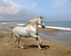 Top 20 Most Beautiful Horses In The World | Pouted Online Magazine – Latest Design Trends, Creative Decorating Ideas, Stylish Interior Designs & Gift Ideas