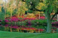 Colonial Gardens on Ashley River Road / Azalea Hillside (SC, USA)