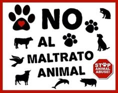maltrato animal - Buscar con Google